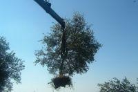 Settlers Destroy 50 Olive Trees South of Al-Khalil