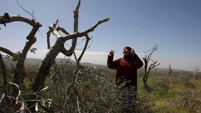 363390_Palestinian-trees