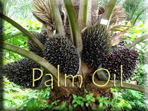 Iran to totally ban palm oil use