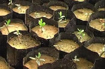 Photo of Hamas develops agri-plans despite sanctions