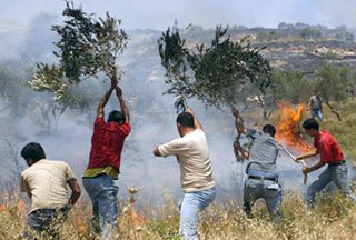 Photo of Israeli settlers attack West Bank farms