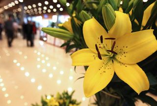 Photo of Tehran flower expo draws masses