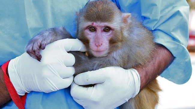 Photo of Iran sends monkey into space and returns it to Earth safely