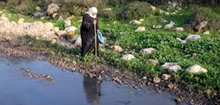 Photo of Zionist settlers pump sewage into ancient Palestinian village