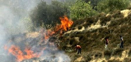 Photo of Extremist Zionist Settlers Burn Olive Trees, Farmlands, Near Qalqilia