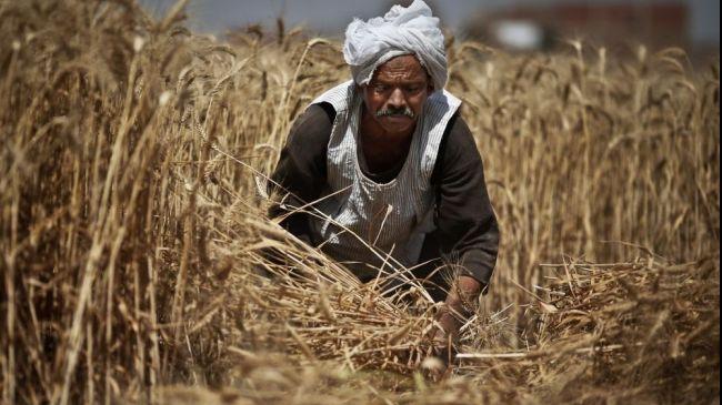Egypt wheat stocks running low, former minister says