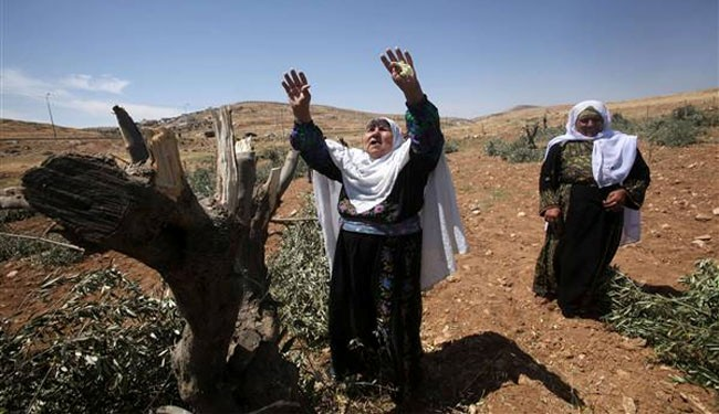 Israeli settlers destroy olive trees in WB: farmers