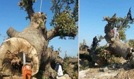 militant_tree2