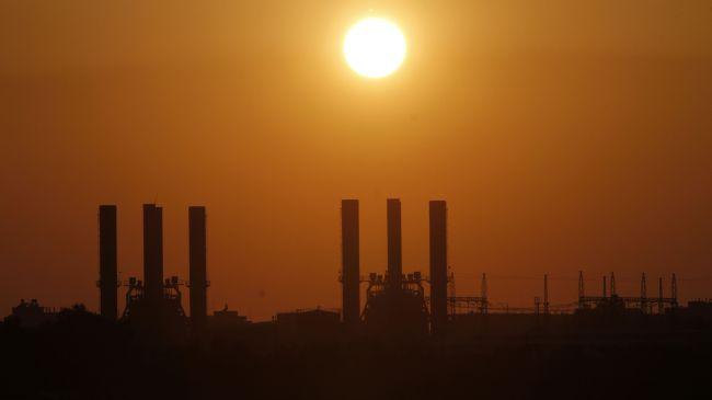337627_Gaza-plant
