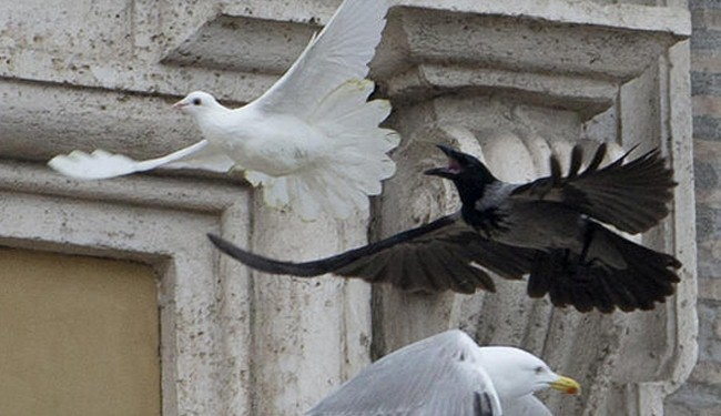Photo of Angry birds attack Pope's symbolic hope for Kiev peace