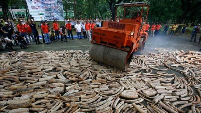 Photo of Four African states reject ivory sales