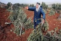 Zionist forces to uproot Palestinian trees