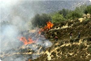 Photo of Israeli settlers set fire to agricultural lands in Nablus