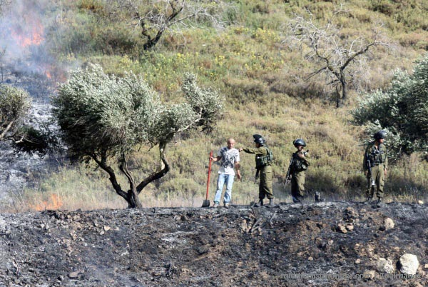 palestinian-olive-farm-burning-burin-village-near-nablus-yitzhar-settlement-2