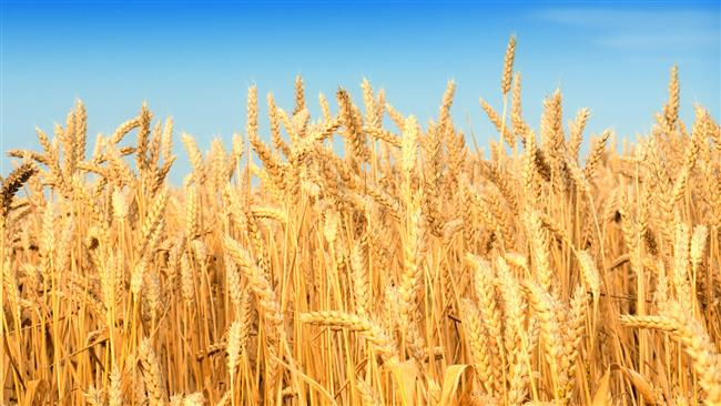 Photo of Iran stops wheat imports, plans exports