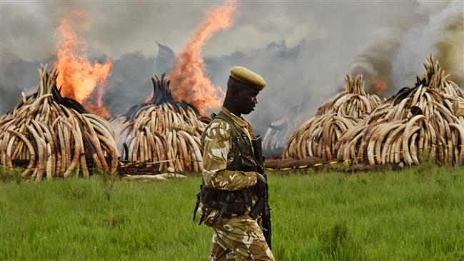 Photo of Kenya sets fire to largest ever ivory stockpile to protest poaching