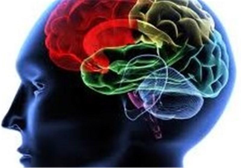 Photo of Brain Markers of Numeric, Verbal, Spatial Reasoning Abilities