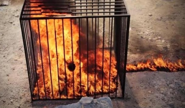 Photo of ISIL Burns 5 Civilians Alive in Cages in Nineveh Province