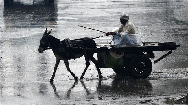 Photo of Pakistan to export donkeys to China, aims to earn millions