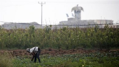 Photo of Zionist regime planes spray farmlands close to Gaza with toxic herbicides