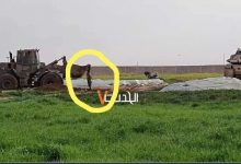 Photo of VIDEO: Palestinian Martyred near Gaza Fence, Zionists' Bulldozer Brutally Drags His Body