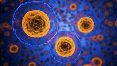 Photo of Iranian Researchers Develop Nano Biosensor to Find Cancer Cells