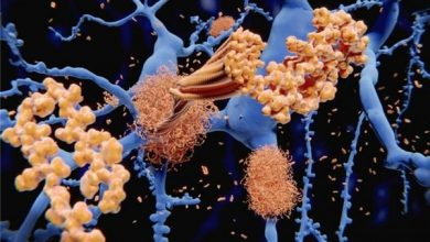 Photo of Iranian Researchers Use Nanotechnology in Drug Delivery System to Treat Cancer