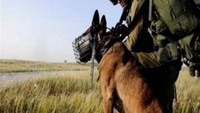 Photo of Zionist Army Conducts Secret Weapons Tests on Animals