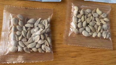 Photo of US says its citizens received mysterious seeds mailed from China