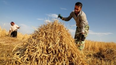 Photo of Minister: Iran to Quadruple Agricultural Products